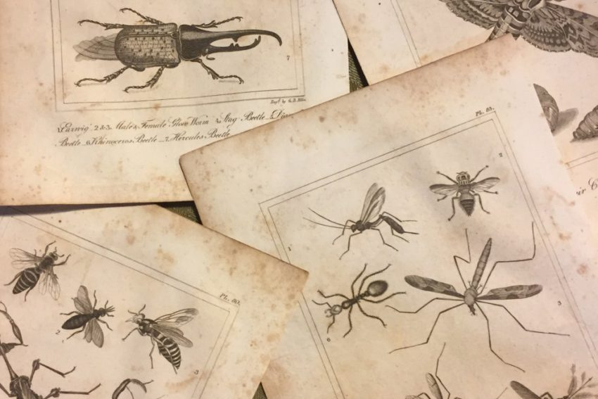 Collections: Insects Part 2